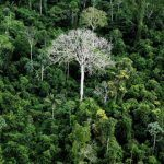 When Do You Step in to Stop Poor Countries Destroying The World's Rain Forest?