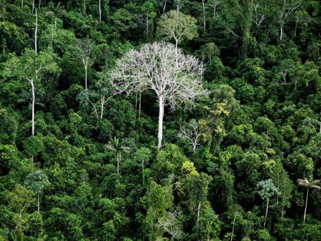 , When Do You Step in to Stop Poor Countries Destroying The World's Rain Forest?