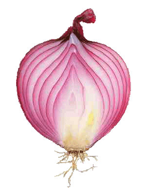 onion1 Obscurity is a Valid Security Layer