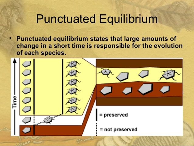 punctuated evolution